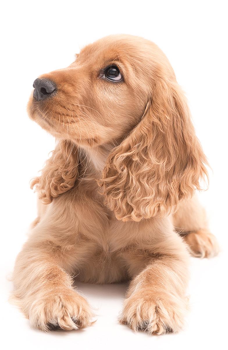 spn-or-neurting-dog-img