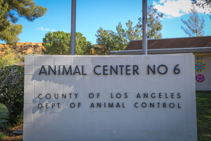 AnimalCare_Castaic1