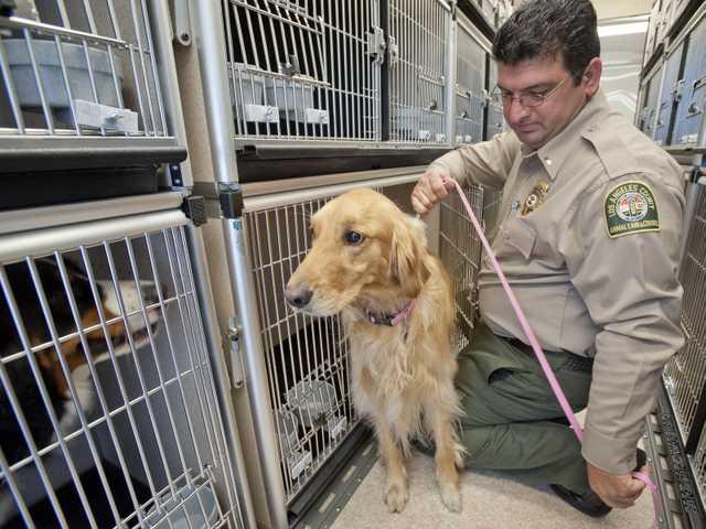 dacc-receives-animal-evac