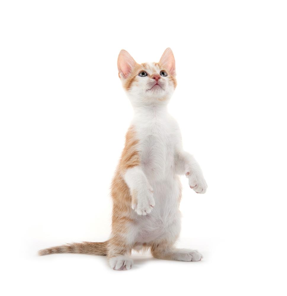 fees-cat