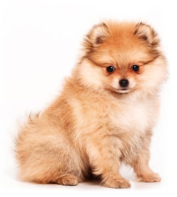 vaccination_puppy3