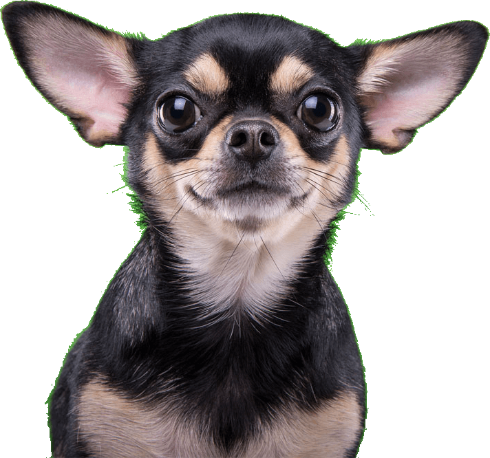 dog.green_img