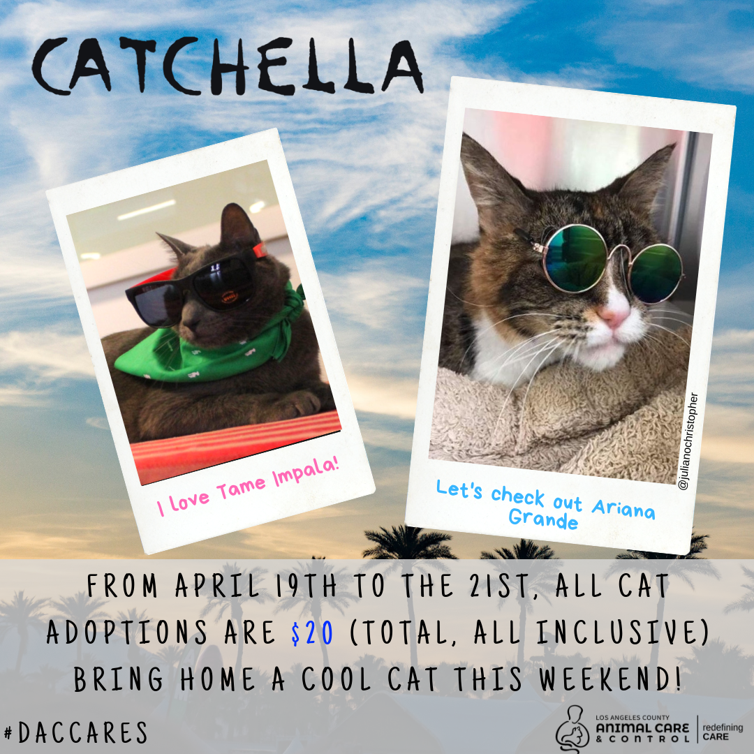 graphic advertising $20 cat adoptions this weekend april 19-21