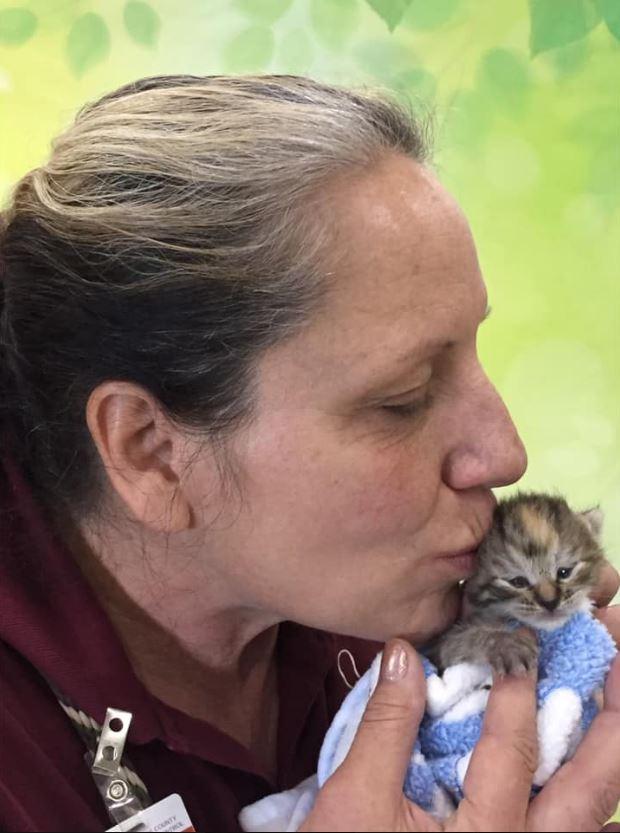 Volunteer Cuddling A Young Kitten